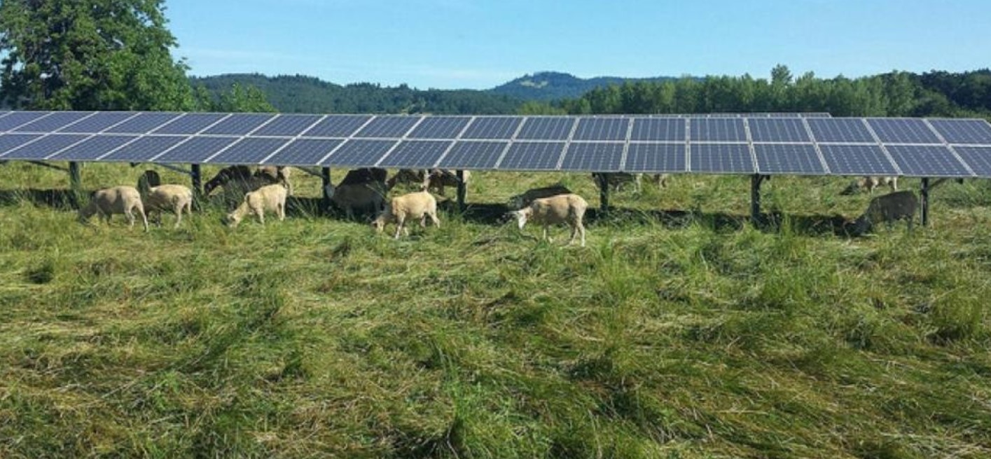 sustainable agriculture and renewable energy